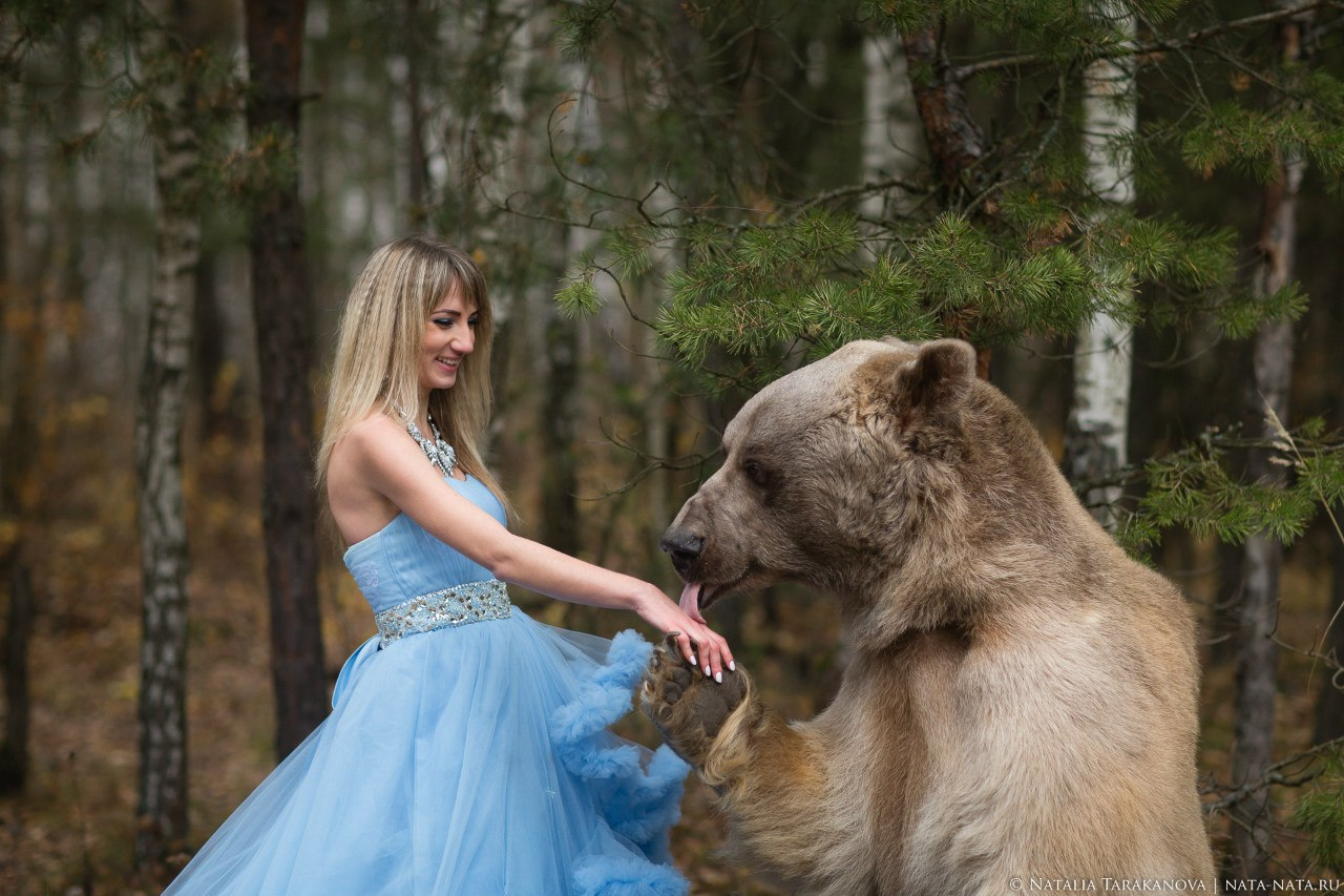 Медведь лижет руку модели