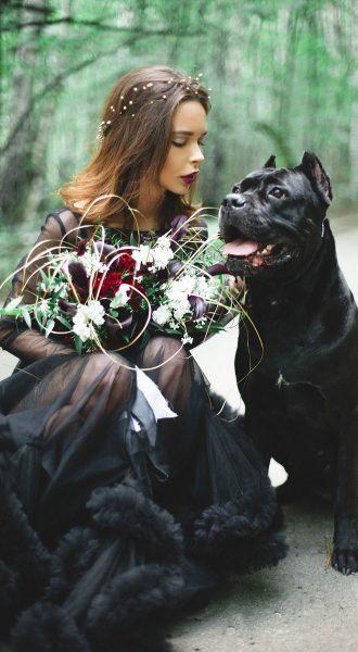 Фотосет с собакой