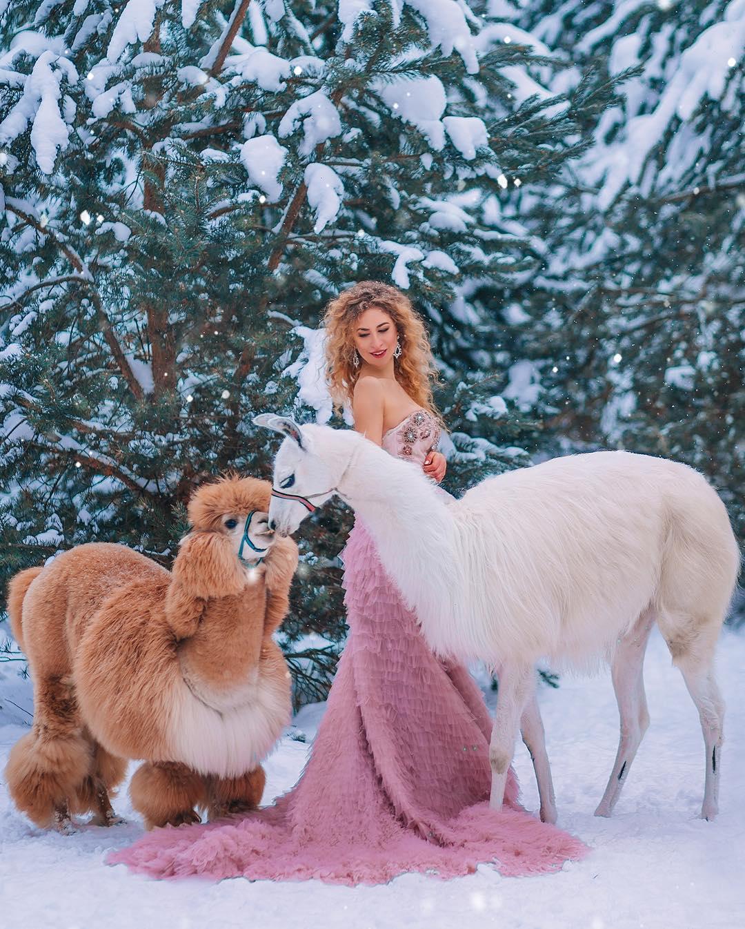 Фотосессия с альпакой и ламой